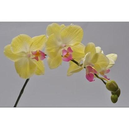Orchidej žlutá 56 cm_0