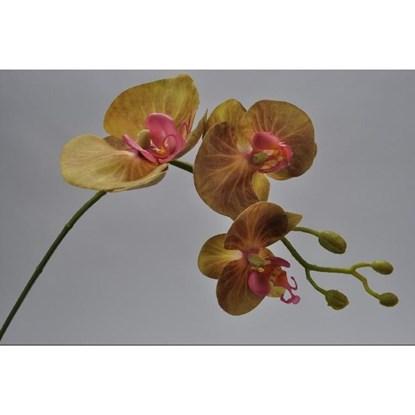 Orchidej větvička zelená 62 cm_0