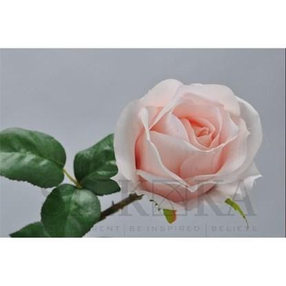 Růže broskvová 48 cm_0