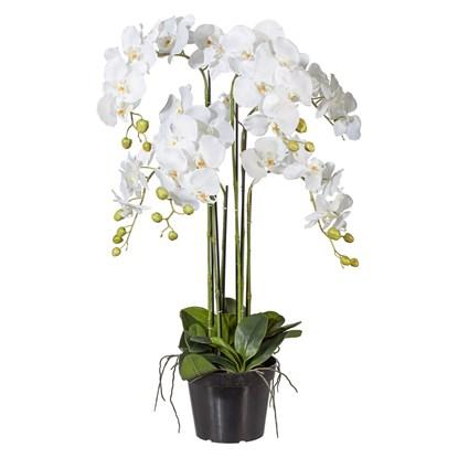 Orchidej Phalenopsis 90cm bílá_0