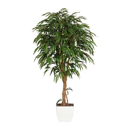 Strom Ficus 180 cm (plastový obal)_0