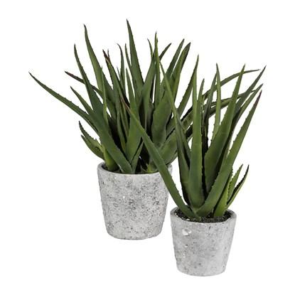 Aloe v květináči 44 cm x4 (vč.květináče)_0