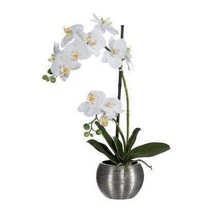 Orchidej Phalenopsis x2 60 cm bílá_0