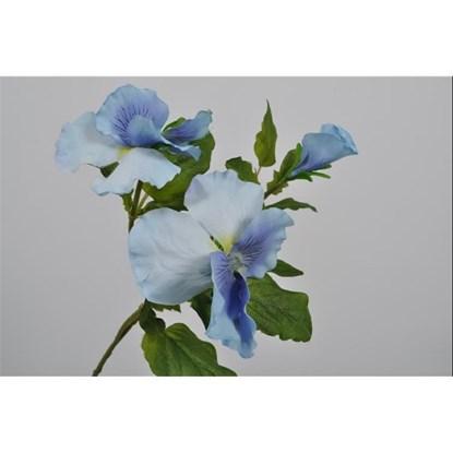 Fialky modrá_0