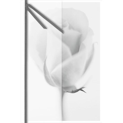 Přání smuteční růže_0