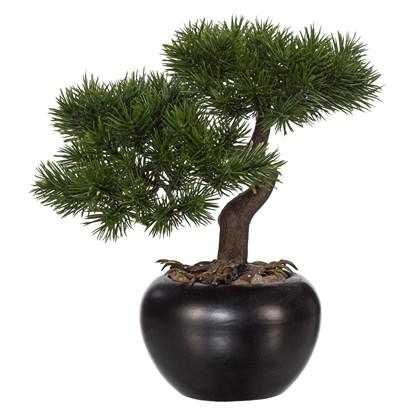 Bonsai Kiefer ca 25 cm_0