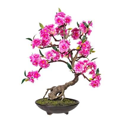 Bonsai CERASUM 50 cm (vč.květináče)_0