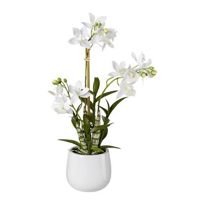 Japanská orchidej 55 cm (vč.květináče)_0