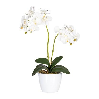 Phalaenopsis 50 cm (vč.keramické mísy)_0